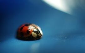 Abstract lady bug wallpaper