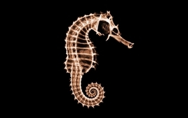Abstract ray seahorses black background wallpaper