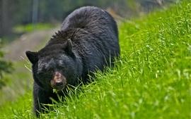 Animals 2012 bears wallpaper