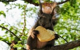 Animals bread squirrels croissants wallpaper