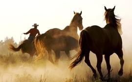 Animals cowboys horses wallpaper