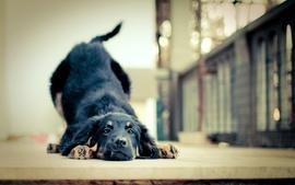 Animals dogs friends pets wallpaper