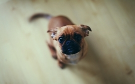 Animals dogs puppies pets wallpaper