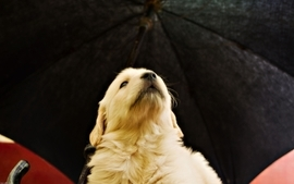 Animals dogs umbrellas wallpaper
