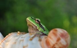 Animals frogs wallpaper