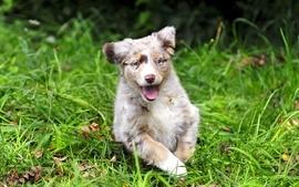 Animals grass puppies wallpaper