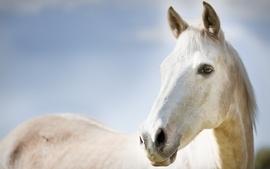Animals horses 2 wallpaper