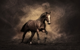 Animals horses 7 wallpaper