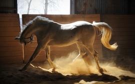 Animals horses 9 wallpaper
