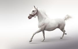 Animals horses white background wallpaper