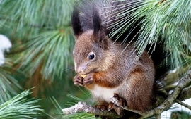 Animals leaves squirrels wallpaper