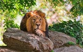 Animals rocks plants feline lions mammals wallpaper