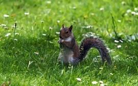 Animals squirrels 10 wallpaper