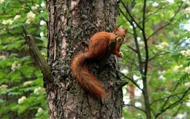 Animals squirrels 8 wallpaper