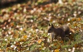 Animals squirrels depth of field wallpaper
