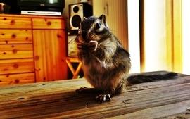 Animals squirrels eating 2 wallpaper