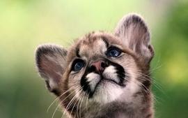 Animals tigers cubs wallpaper