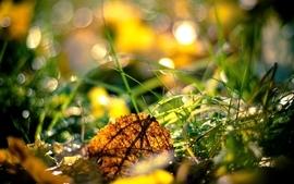 Autumn grass fallen leaves wallpaper