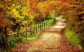 Autumn path wallpaper