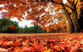 Autumn season autumn wallpaper
