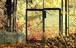 Autumn season fences leaves fallen leaves wallpaper