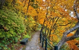 Autumn season forest path wallpaper