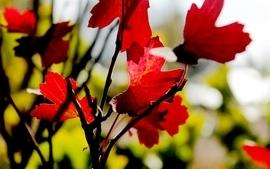 Autumn season leaves blurred background wallpaper
