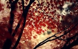 Autumn wood forest photography leaves deviantart momiji wallpaper