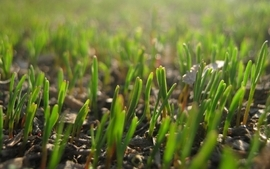 Baby grass widescreen wallpaper