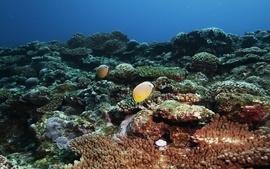 Beach seas fish summer underwater coral reef wallpaper