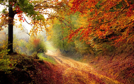 Beautiful Autumn Road wallpaper