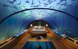 Beds fish pillows bedroom underwater wallpaper
