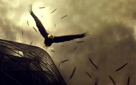 Birds bald eagles wallpaper