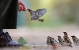 Birds eating wallpaper