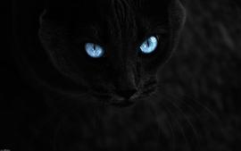 Black cats blue eyes animals photomanipulations wallpaper