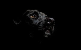 Black dogs wallpaper