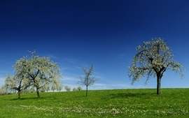 Blue trees grass skyscapes wallpaper