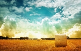 Bump plx ker alt wheat field ker altmaybe warmlast oneneed wallpaper