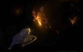 Butterfly animals fireflies rats mice wallpaper