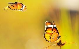 Butterfly macro depth of field wallpaper
