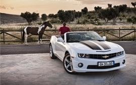 Cars horses wallpaper