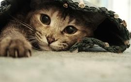Cats animals carpet wallpaper