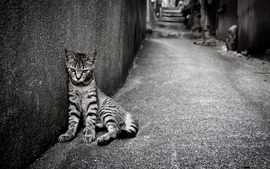 Cats animals grayscale wallpaper