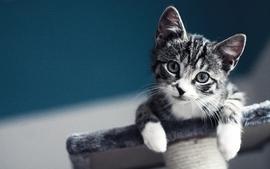 Cats animals kittens 2 wallpaper