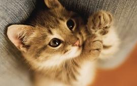 Cats animals kittens 4 wallpaper