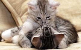 Cats animals kittens 5 wallpaper