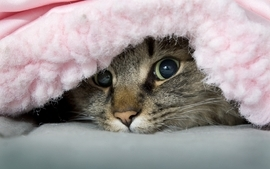 Cats animals peeking wallpaper