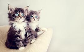 Cats blue eyes animals deviantart kittens wallpaper