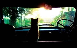 Cats cars silhouette toy camera effect wallpaper