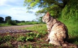 Cats plants depth of field wallpaper